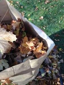 November Leaves by Maria Scala
