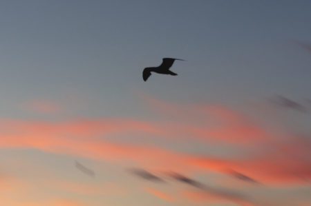 Bird flying through sky
