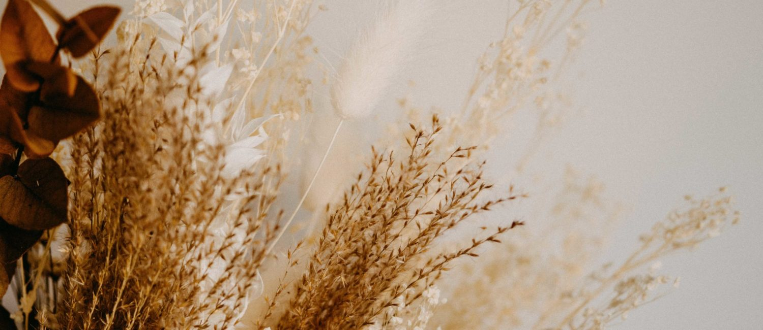 dried flowers in neutral colors