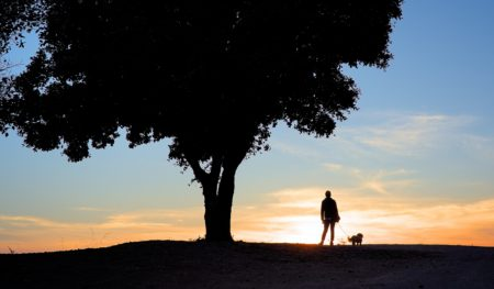 person with dog under tree