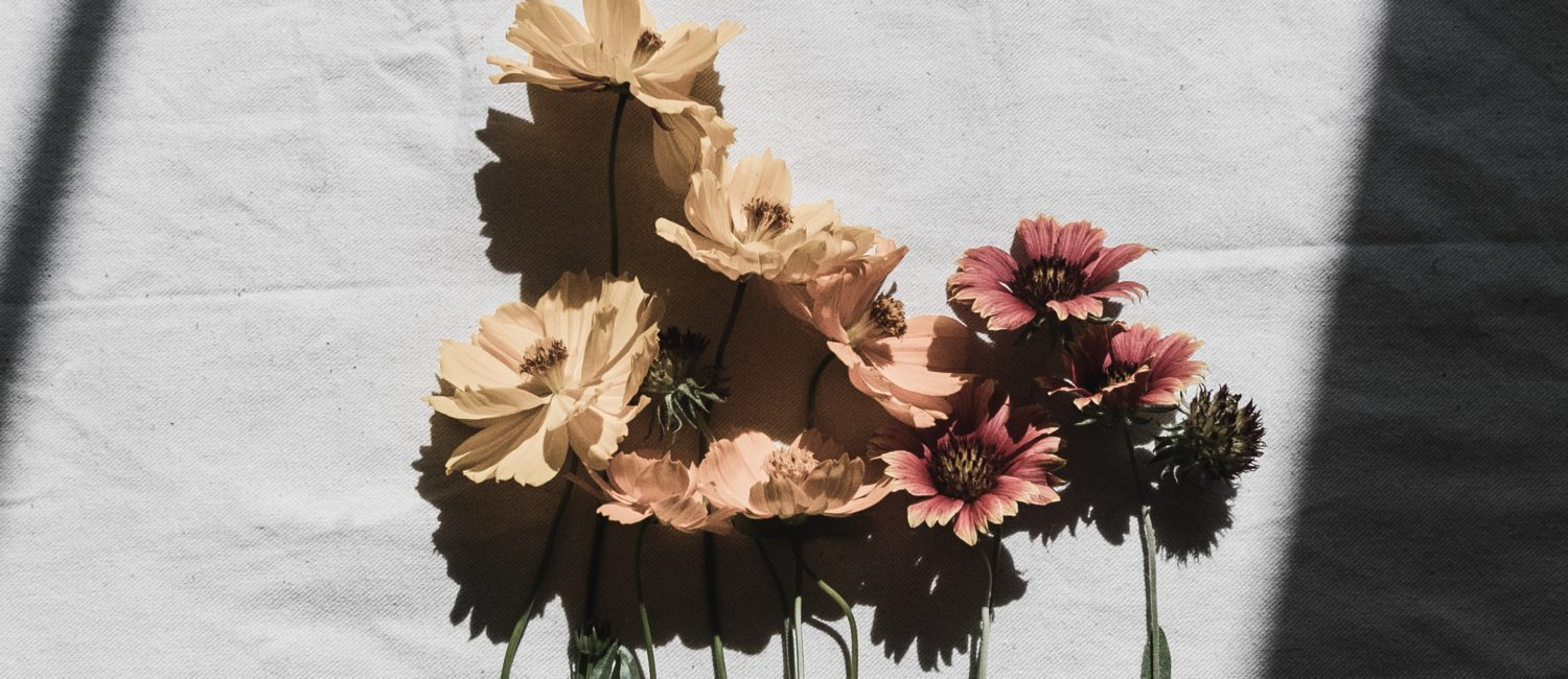 flowers against paper with shadow