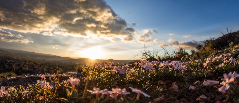 sunrise over meadow